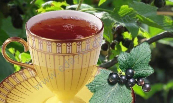 Чай смородина свойства